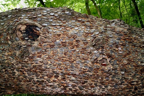 pennies in a tree