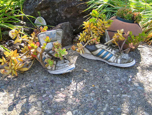 Flowers growing in old shoes