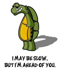 Slow tortoise with attitude