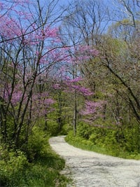 Pretty running trail in spring time