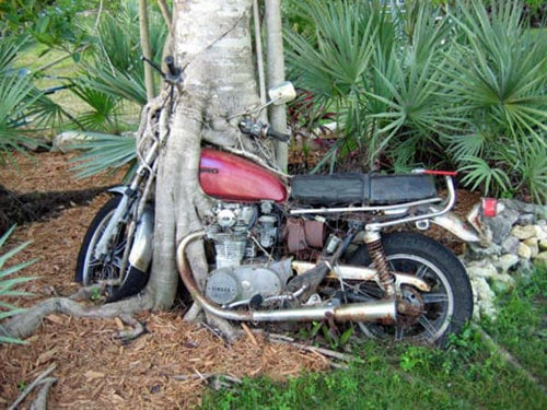 a motorcycle in the middle of a tree