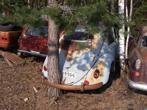 tree growing through a car bumper